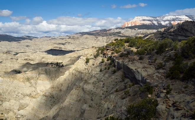 A dinoszauruszok kihalása kedvezett az erdők kialakulásának