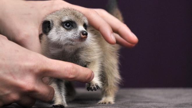 A legaranyosabb kisállatokkal kíván boldog karácsonyt az Állatkert