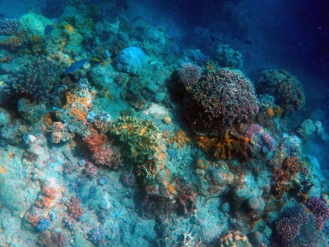 Új mélytengeri fajokat fedeztek fel az Atlanti-óceánban