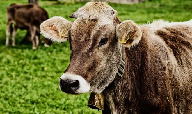 Környezetbarát-e az organikus hús?
