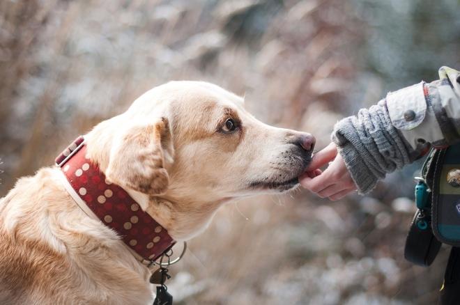 Ételmaradékok segíthették a kutyák háziasítását