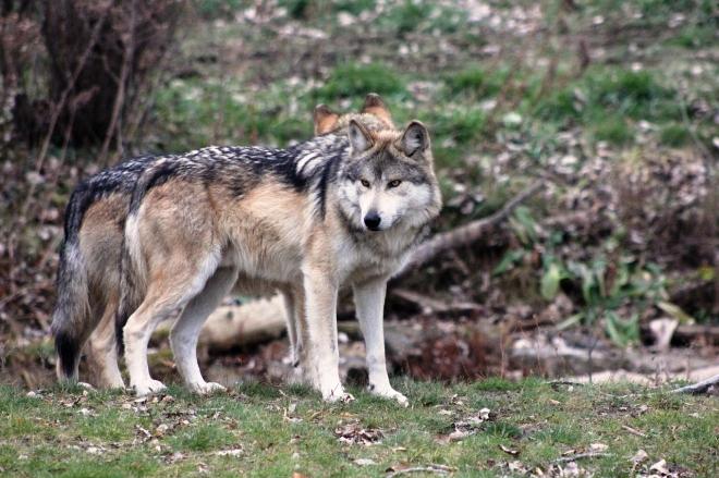 Matematikai modell segítheti a természetvédők munkáját