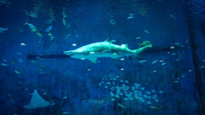 Folyamatosan csökken a cápák száma az óceánokban