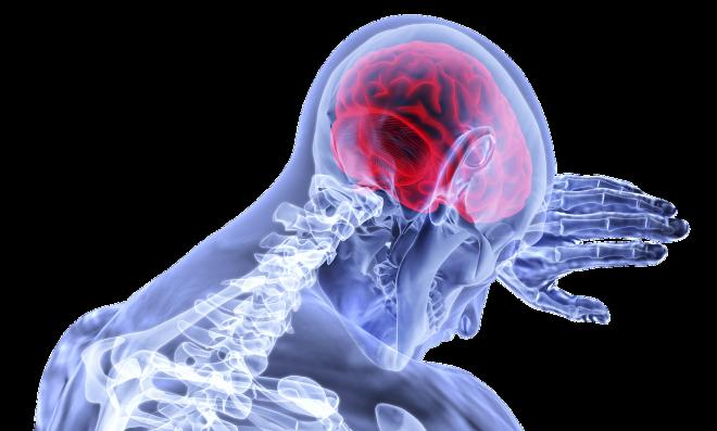 Felderítették a fenyegetettségre adott agyi válasz mechanizmusát