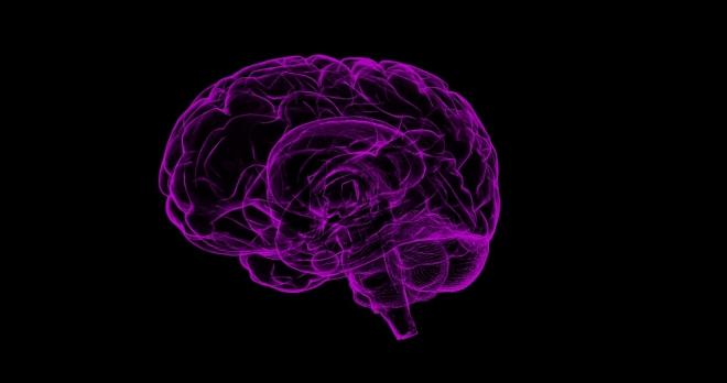 Új eljárást dolgoztak ki az agysejtek működésének vizsgálatára