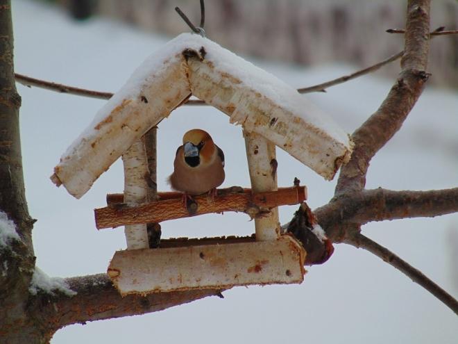 Mivel ne etessük télen a madarakat?