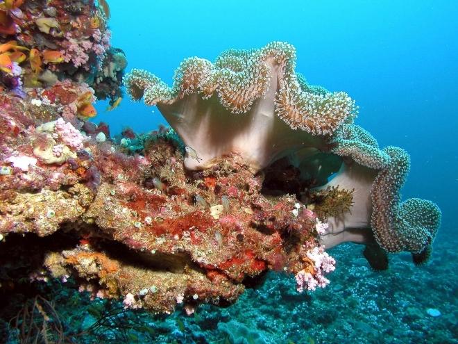 Olajprojekt fenyegeti a Vörös-tenger korallzátonyait