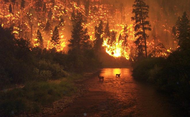 Az erdőtüzek füstje károsabb, mint a kipufogógázok