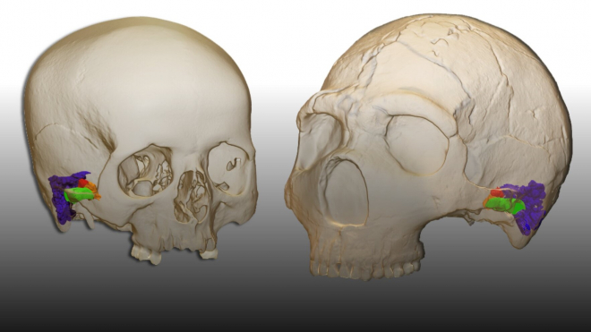 Képes volt-e a neandervölgyi ember a verbális kommunikációra?