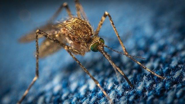 A szúnyogok megfigyelésére jött létre weboldal