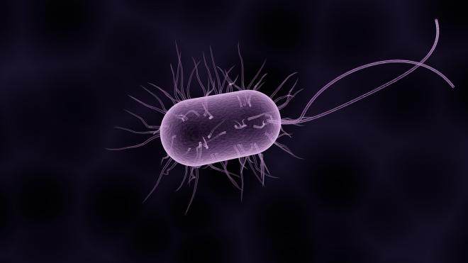 Ősbaktériumok felépítését vizsgálták az ELTE kutatói