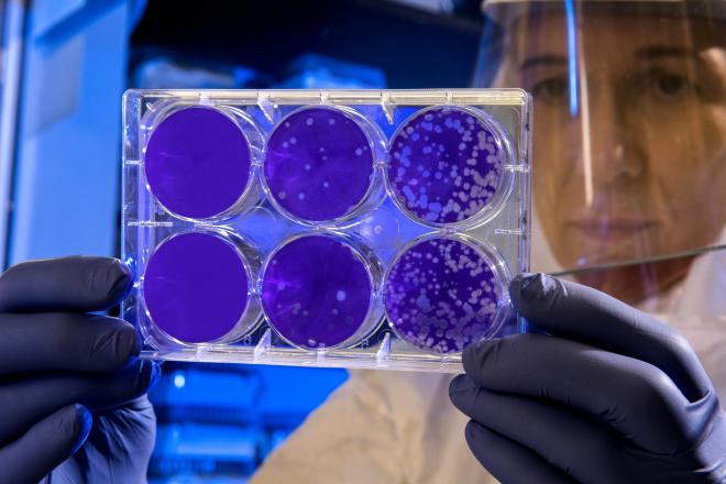 Baktériumölő bevonatot fejlesztettek ki