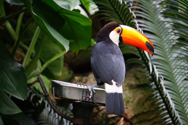 Felmérték a világ madárpopulációját