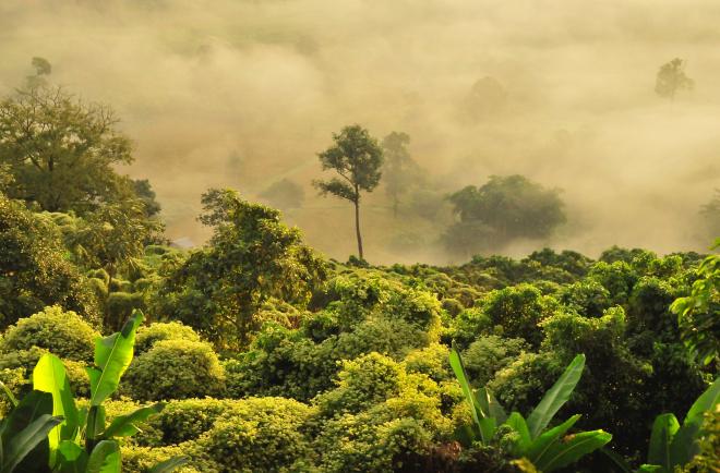 Az erdőirtás okozza a példátlan szénkibocsátást