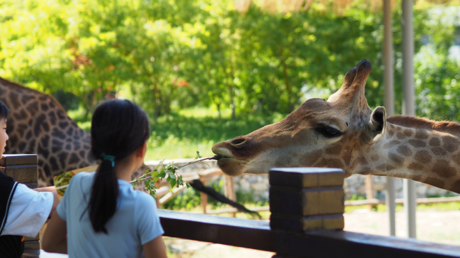 Rászoruló gyermekeknek szervez tábort a Fővárosi Állatkert