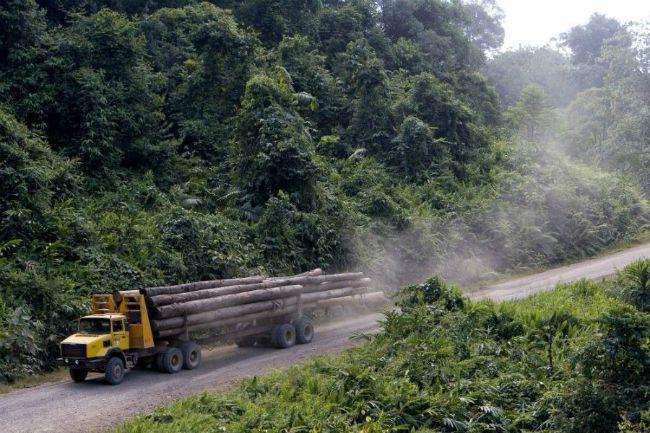 Fakitermelés Malajziában (Fotó: AFP / Hirado.hu)
