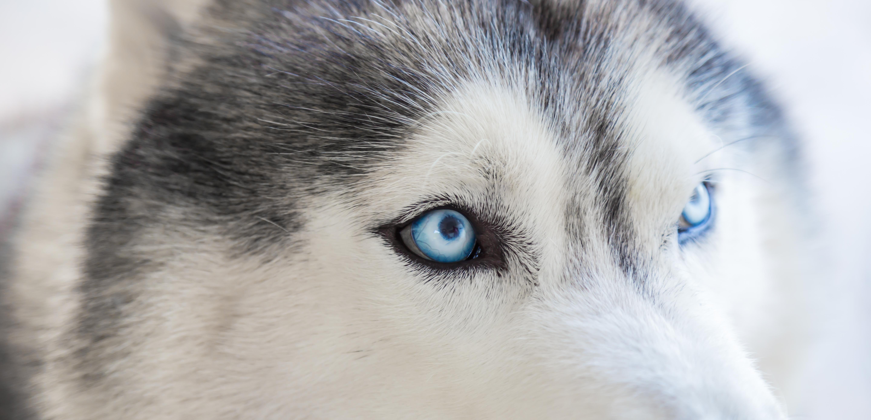 ragadozó látása lecke a témában vigyázzon a szemére