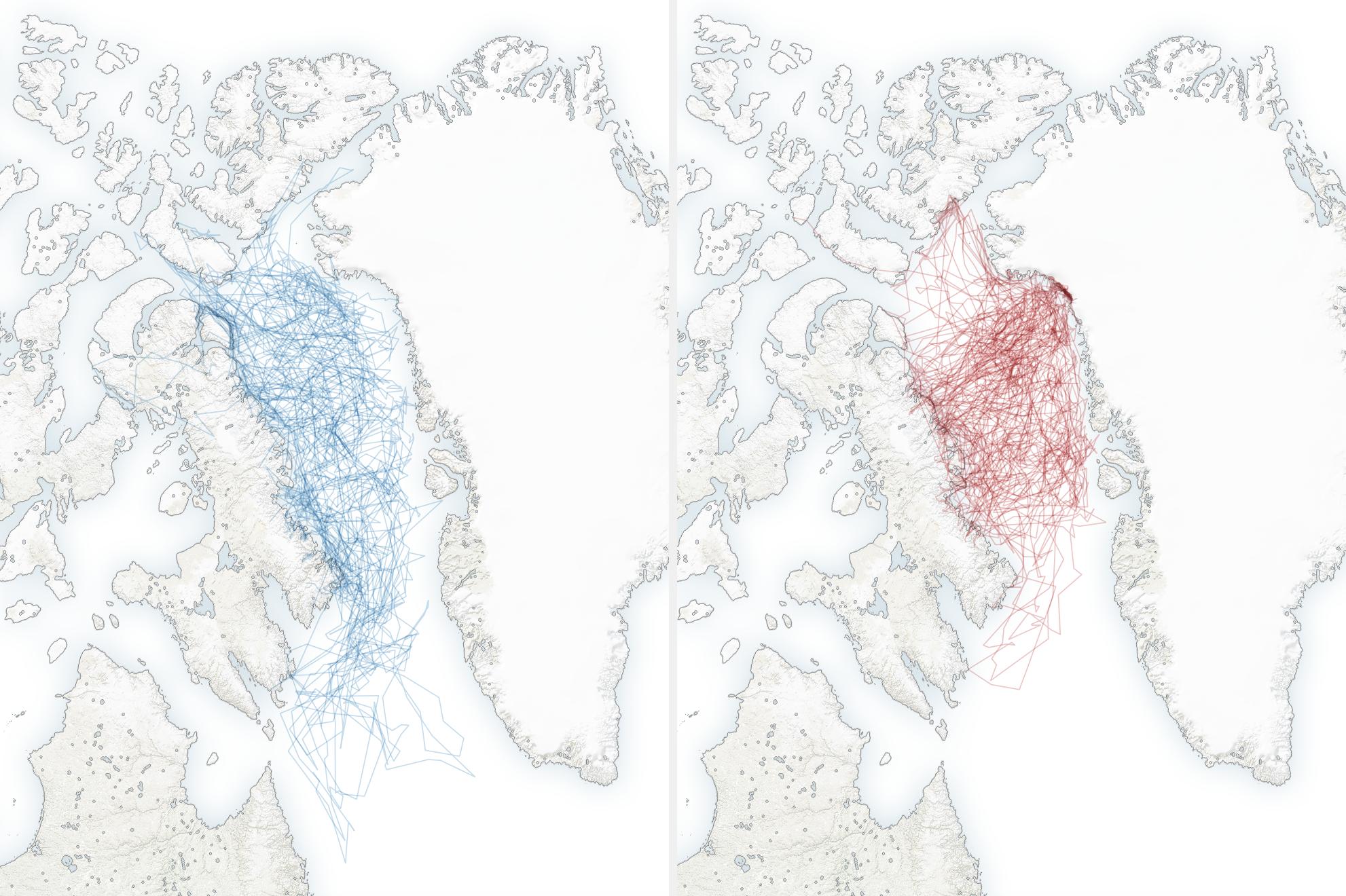 A jegesmedvék által bejárt terület az 1990-es években (kékkel, balra) és a 2000-es években (pirossal, jobbra)
