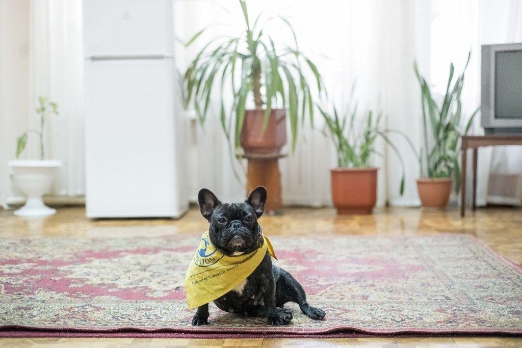 Ő egy ukrán terápiás kutya, aki a PTSD-vel élőkön segít. Kép: Oleksandr Rupeta / NurPhoto