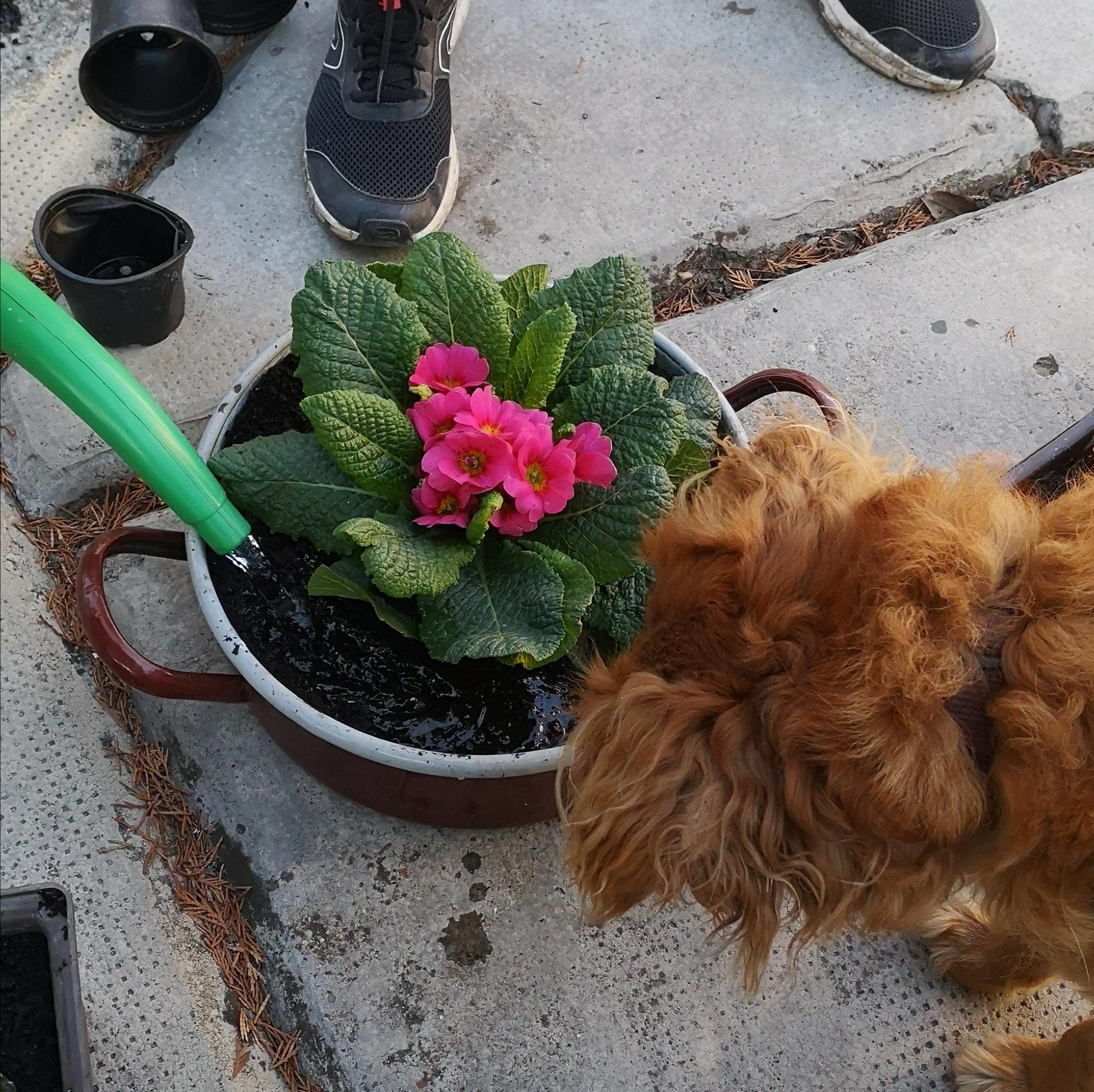 Luca a kertészeti főfelügyelő