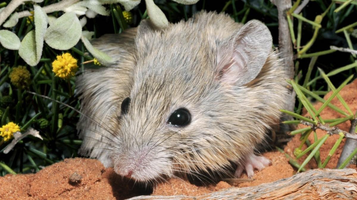 Forrás: Australian Wildlife Conservancy